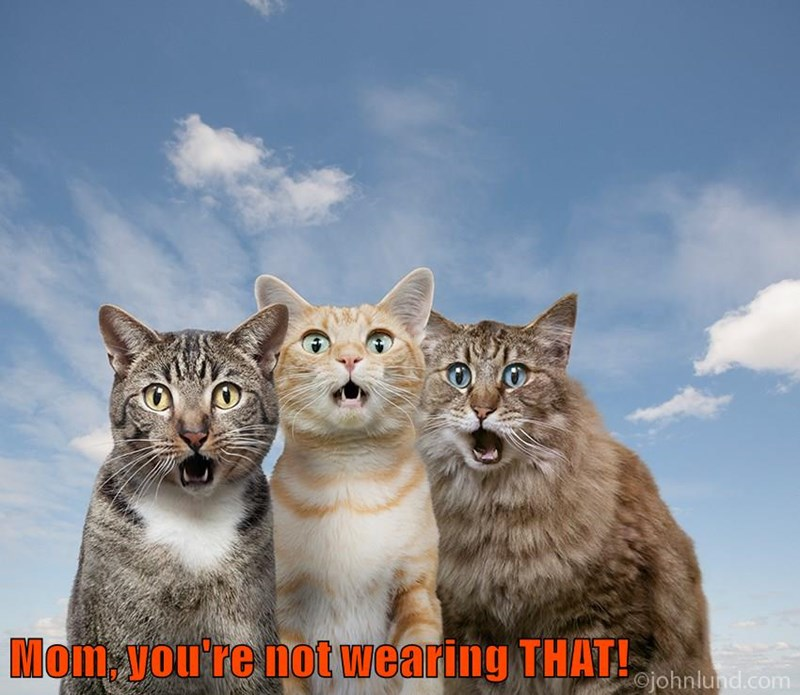 that wearing not caption mom Cats - 8970222848