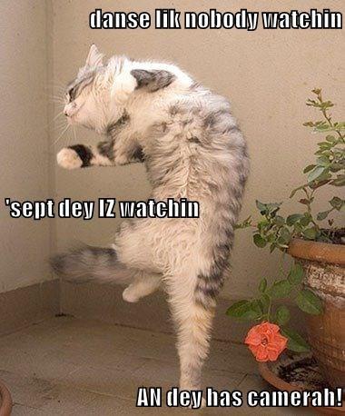 cat nobody camera dance caption watching - 8970356992