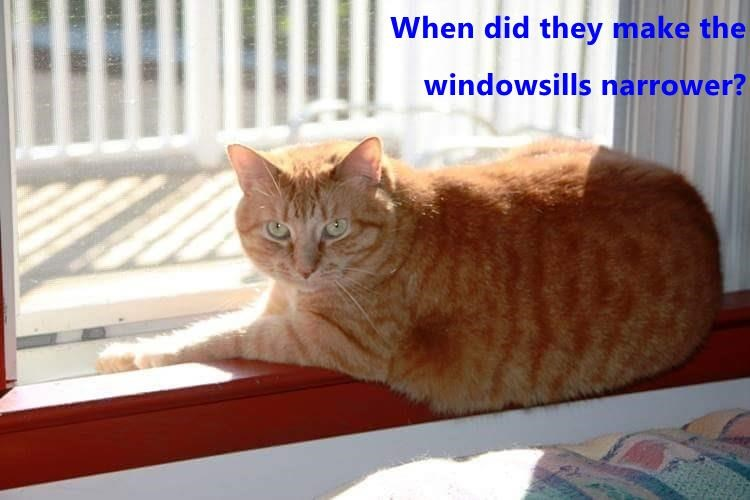 cat narrower make caption windowsills when - 8970388480
