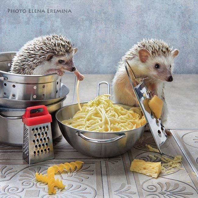 Hedgehog - PHOTO ELENA EREMINA