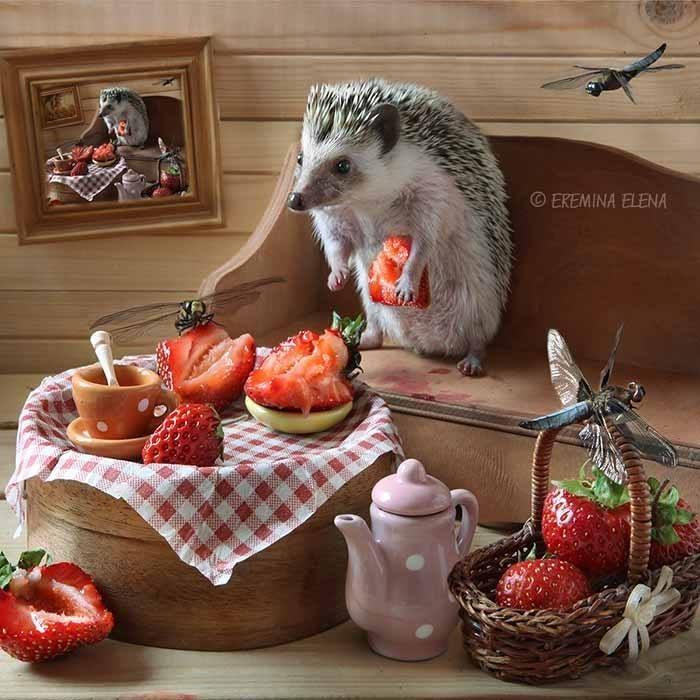 Hedgehog - EKEMINA ELENA