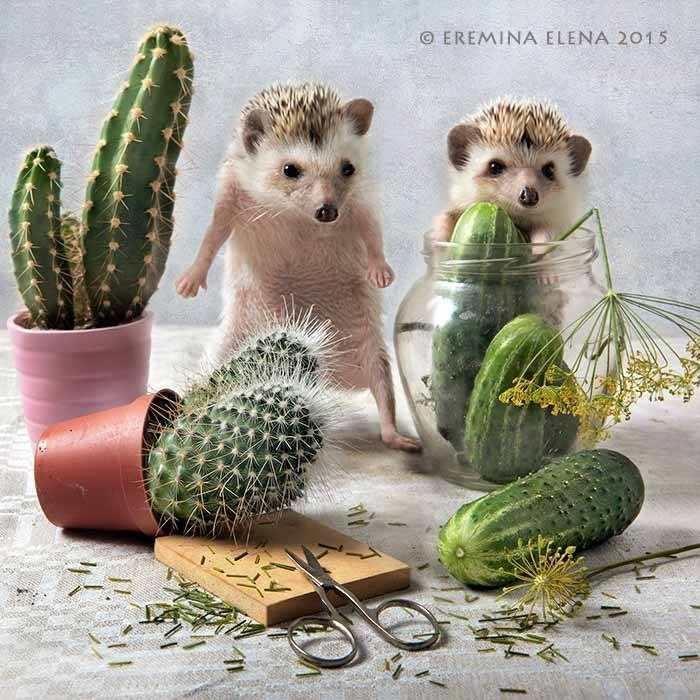 Cactus - O EREMINA ELENA 2015