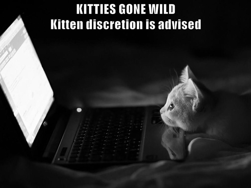 KITTIES GONE WILD                                                       Kitten discretion is advised