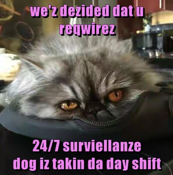 we'z dezided dat u reqwirez   24/7 surviellanze                                         dog iz takin da day shift