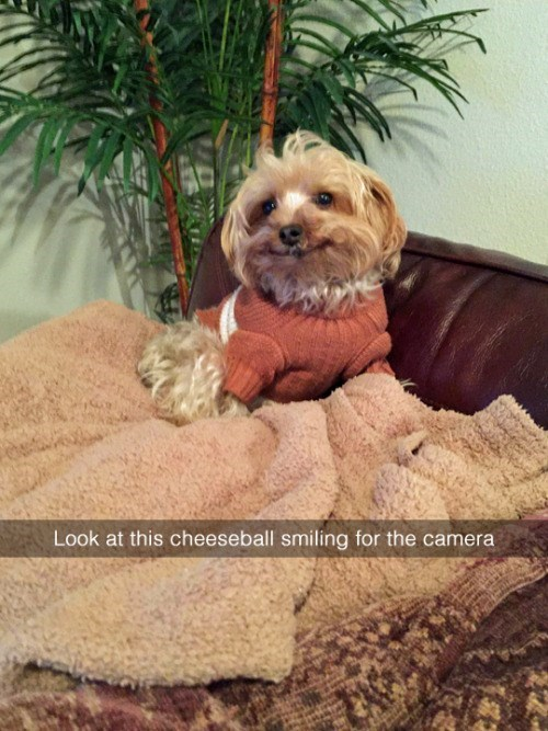 say cheese pupper
