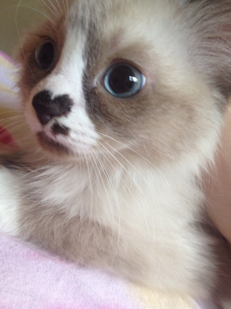 that little heart shaped nose