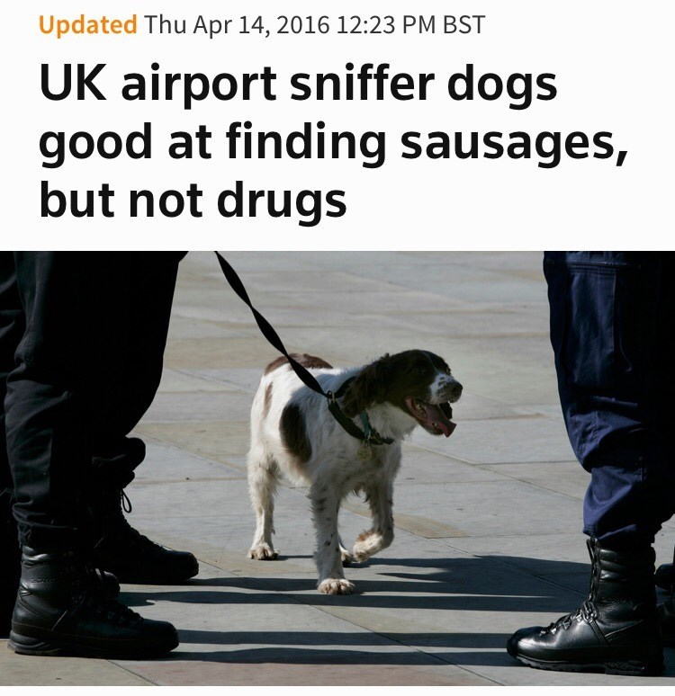 image news dogs Sausages Are Obviously the Better Choice