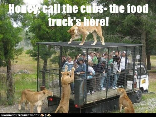 Honey, call the cubs- the food truck's here!