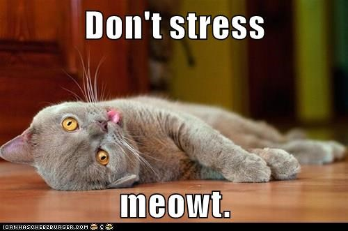 Don't stress  meowt.
