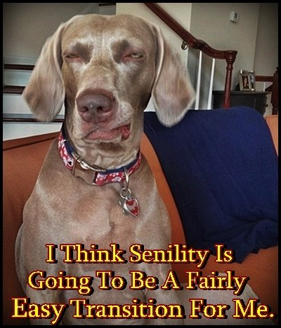 Senility is going to be REAL easy for me to adjust to: