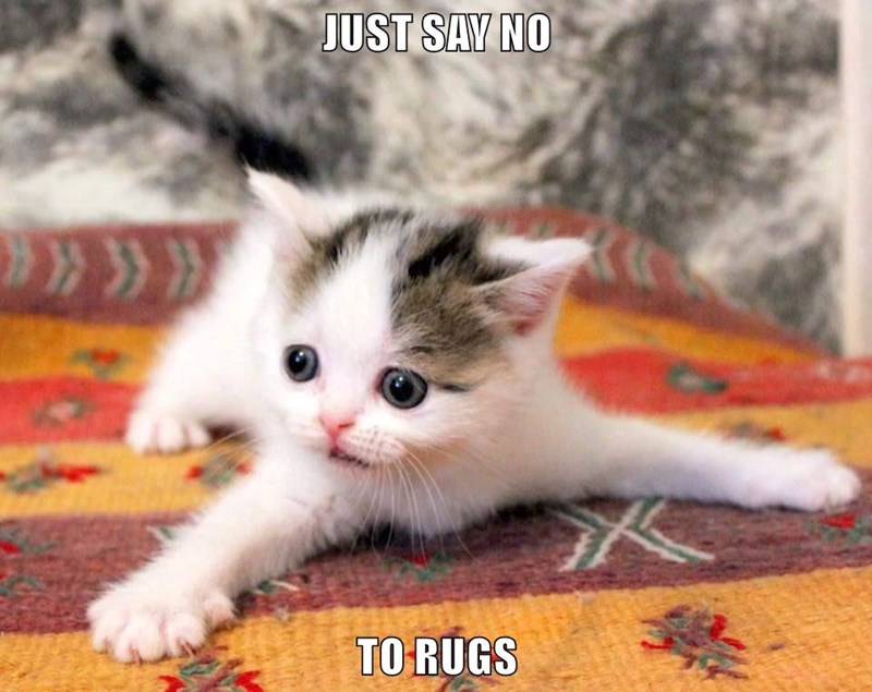 JUST SAY NO  TO RUGS