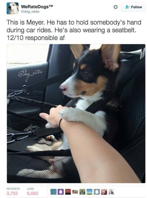 Dog - WeRateDogsTM @dog rates Follow This is Meyer. He has to hold somebody's hand during car rides. He's also wearing a seatbelt. 12/10 responsible af tates RETWEETS LIKES O 3,752 9,562