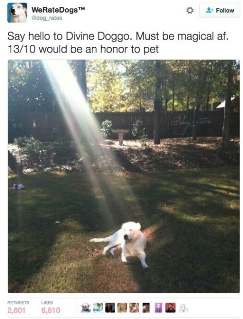 Canidae - WeRateDogs TM edog rates Follow Say hello to Divine Doggo. Must be magical af 13/10 would be an honor to pet RETWEETS LUKES 2,601 6,510