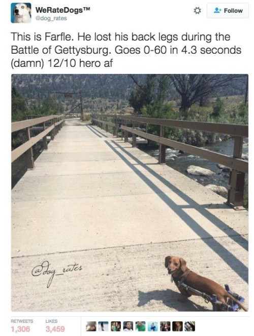 Adaptation - WeRateDogsTM edog rates Follow This is Farfle. He lost his back legs during the Battle of Gettysburg. Goes 0-60 in 4.3 seconds (damn) 12/10 hero af ates RETWEETS LIKES