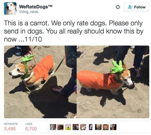 Organism - WeRateDogsTM @dog rates Follow This is a carrot. We only rate dogs. Please only send in dogs. You all really should know this by now..11/10 RETWEETS LIKES 2,495 6,700