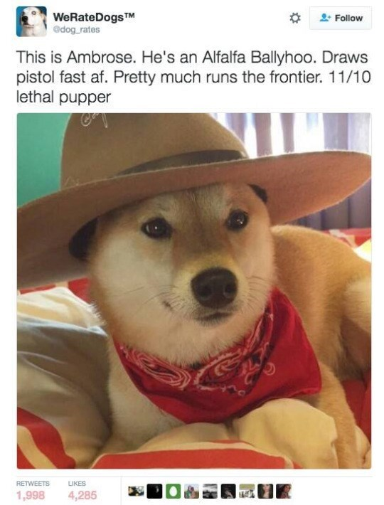 Dog - WeRateDogsTM edog rates Follow This is Ambrose. He's an Alfalfa Ballyhoo. Draws pistol fast af. Pretty much runs the frontier. 11/10 lethal pupper RETWEETS LIKES 1,998 4,285
