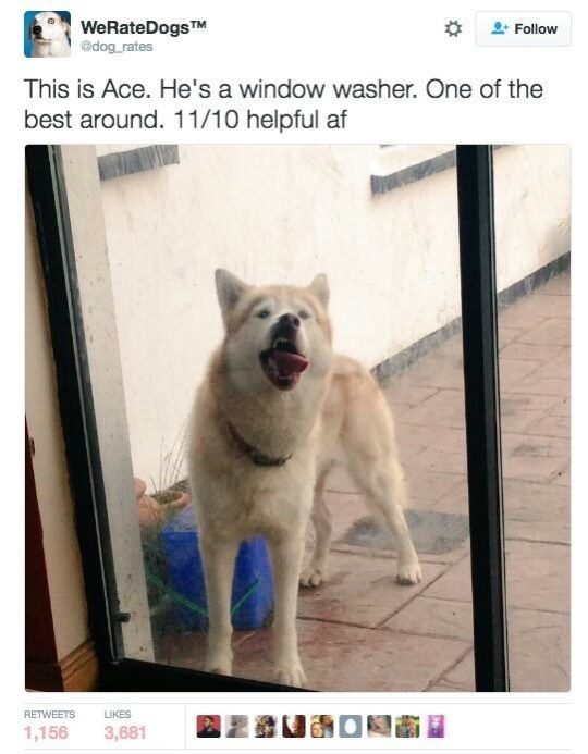 Canidae - WeRateDogsTM @dog rates Follow This is Ace. He's a window washer. One of the best around. 11/10 helpful af RETWEETS LIKES 1,156 3,681