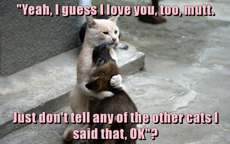 cat love you mutt puppy too other dont caption Cats tell - 8971122176