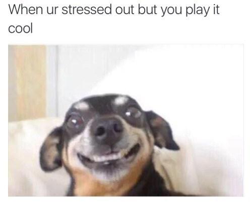 image stress dogs Who Me? I'm FINE