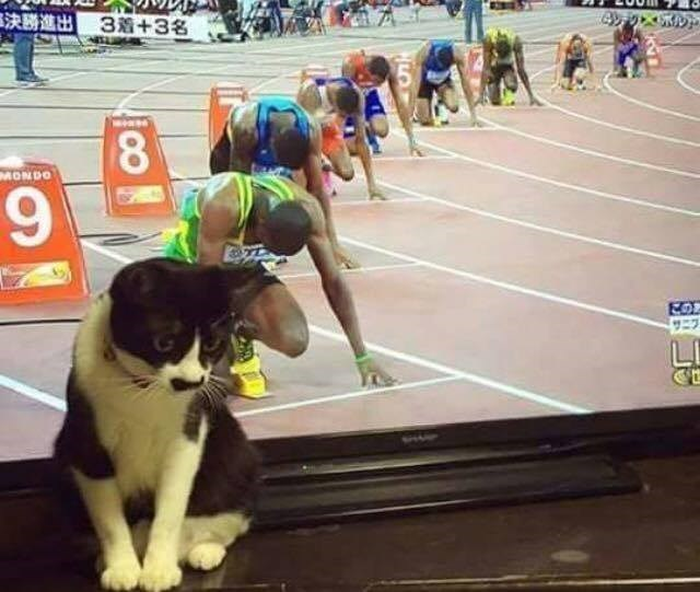 Funny cats - Cat is sitting next to the TV in the same position as the runners of the race being watched.