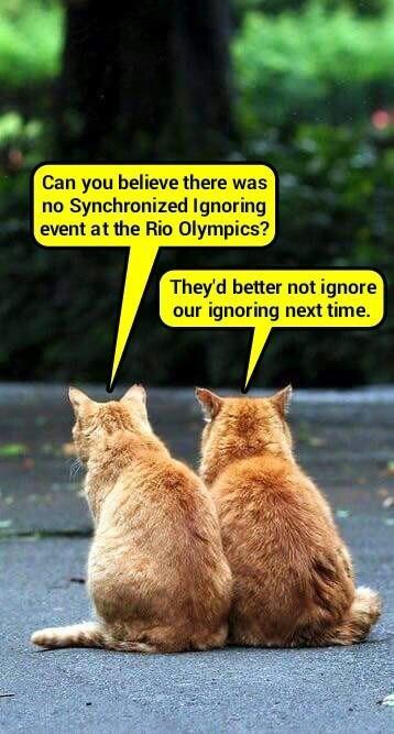 Hell hath no fury like snob kitties snubbed (recaption: http://tinyurl.com/gvoc8gx