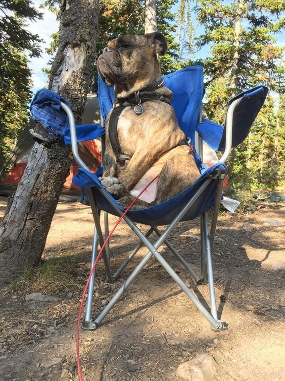 the king of camping