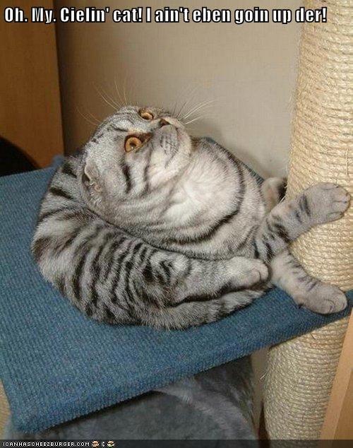 Oh. My. Cielin' cat! I ain't eben goin up der!