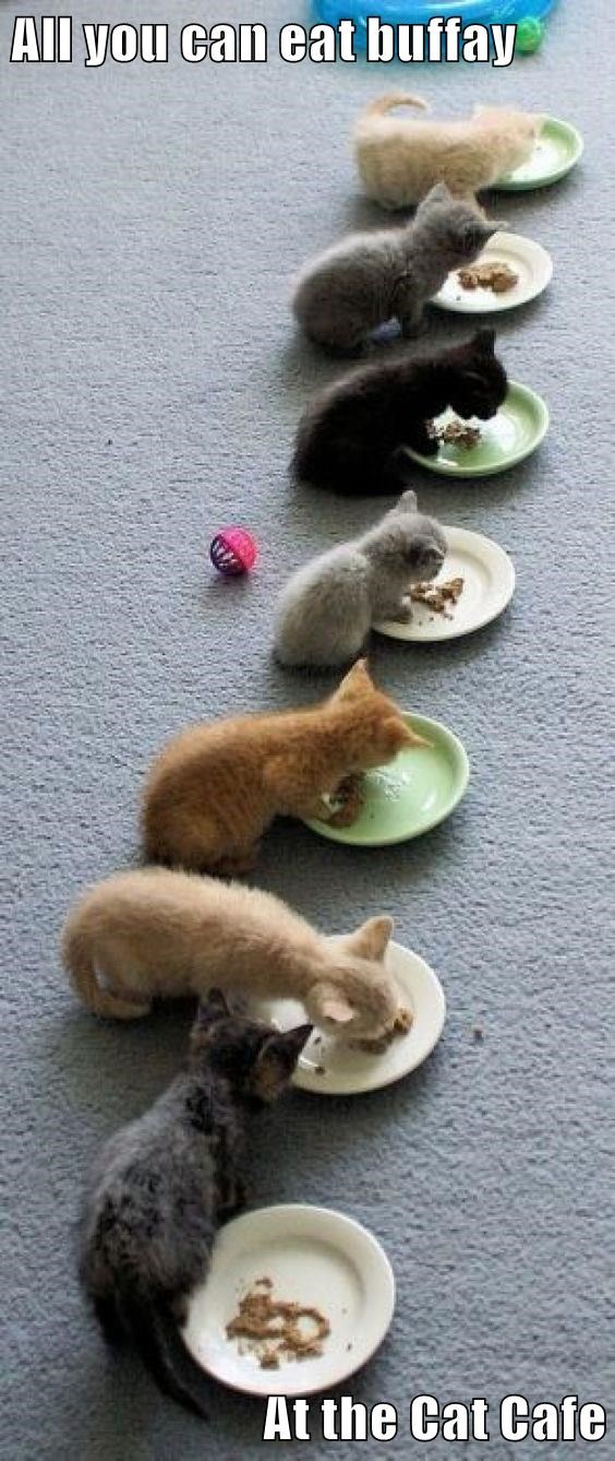 All you can eat buffay  At the Cat Cafe