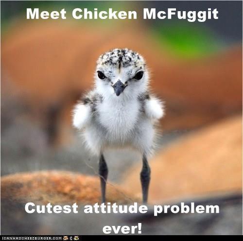 Meet Chicken McFuggit  Cutest attitude problem ever!