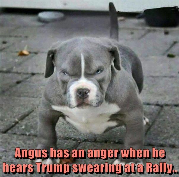 Angus has an anger when he hears Trump swearing at a Rally..