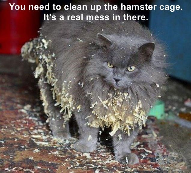 You need to clean up the hamster cage. It's a real mess in there.