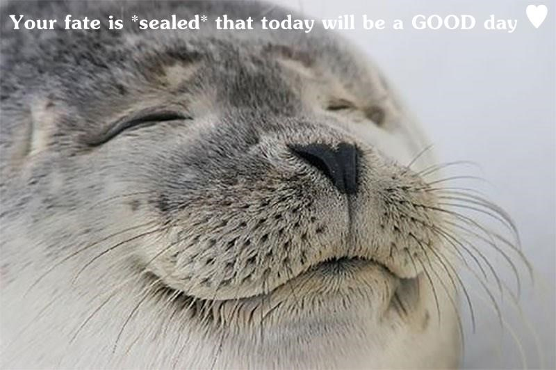 Your fate is *sealed* that today will be a GOOD day ♥