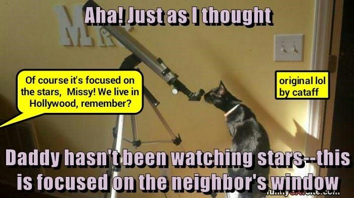 cataff's lol: http://cheezburger.com/8971697152