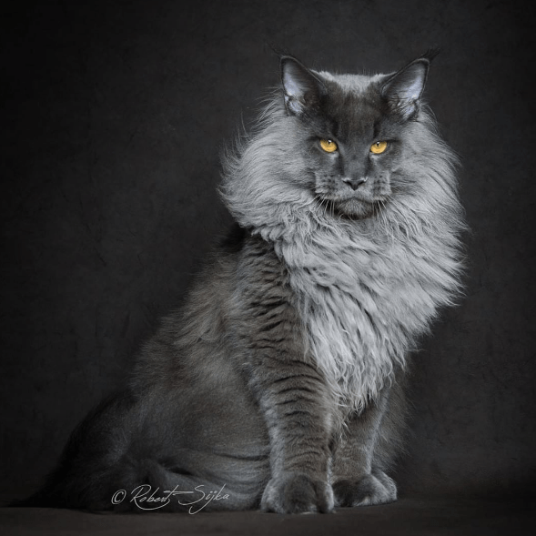 Cat - oRSpde