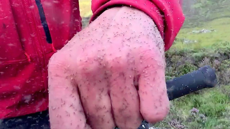 trending video news mosquito midges attack scotland