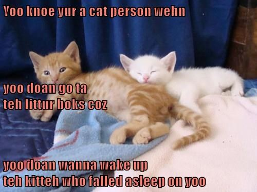 Yoo knoe yur a cat person wehn yoo doan go ta                                                                 teh littur boks coz yoo doan wanna wake up                                                            teh kitteh who falled asleep on yoo