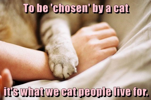 To be 'chosen' by a cat   it's what we cat people live for.