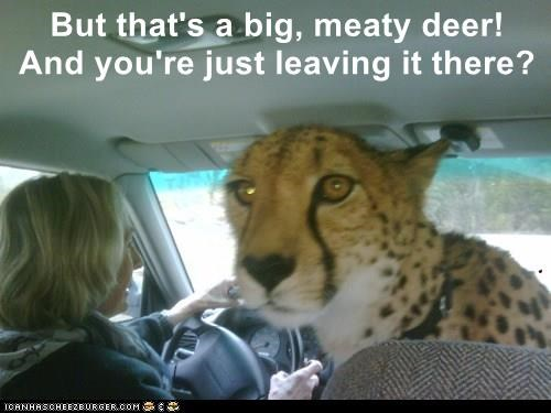 But that's a big, meaty deer!         And you're just leaving it there?