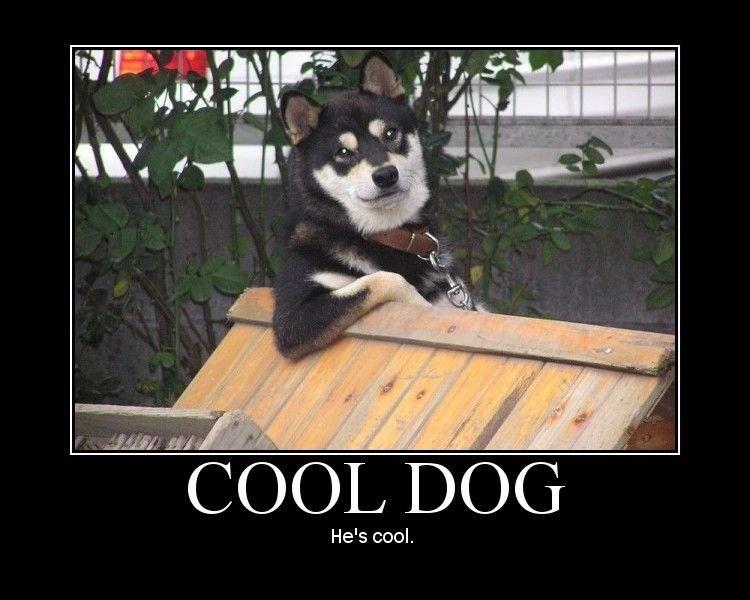 Mammal - COOL DOG He's cool.