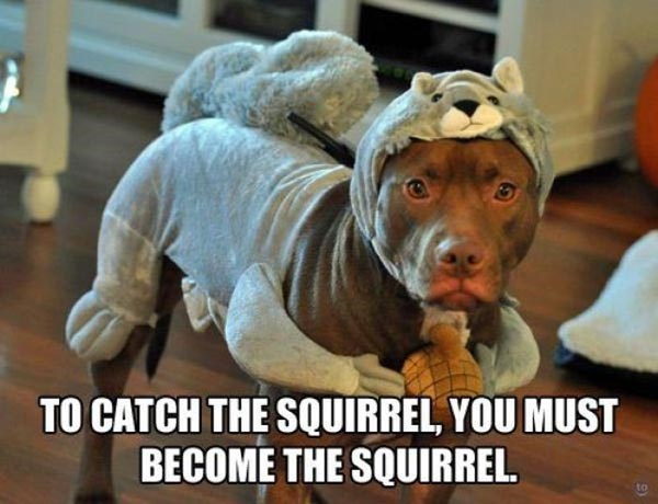 Dog breed - TO CATCH THE SQUIRREL, YOU MUST BECOME THE SQUIRREL.