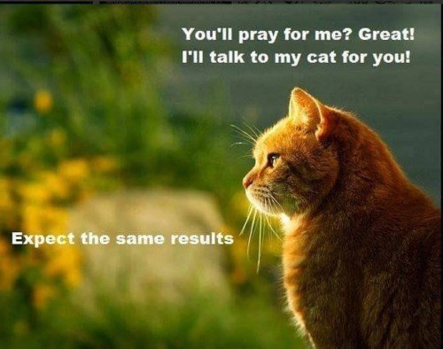 Praying To Your Kitteh Also Helps...