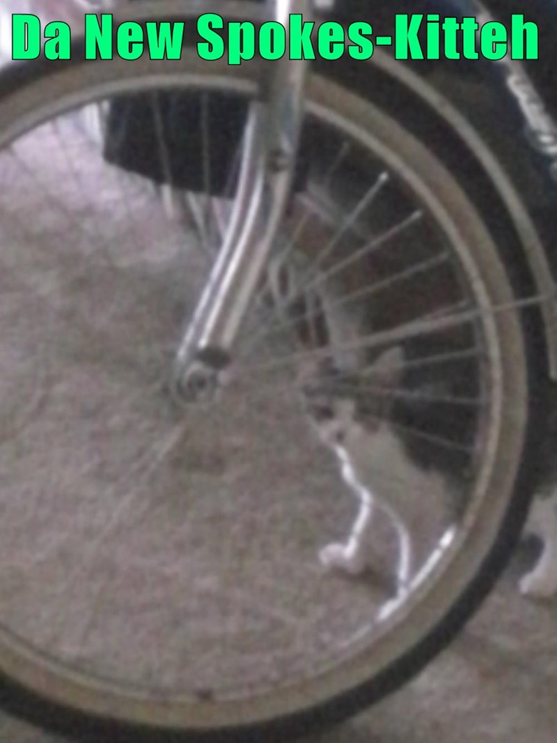 Da New Spokes-Kitteh