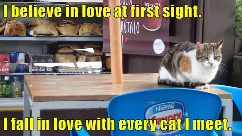 I believe in love at first sight.  I fall in love with every cat I meet.
