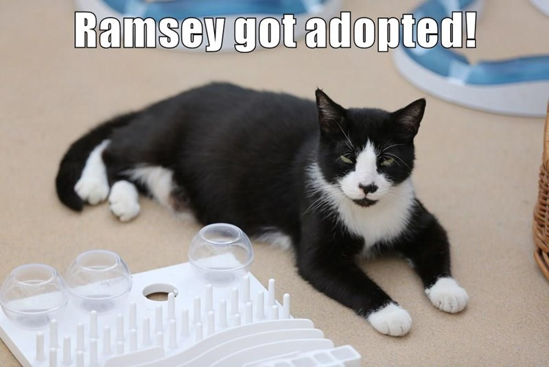 Ramsey got adopted!