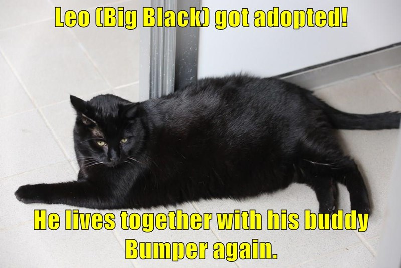 Leo (Big Black) got adopted!  He lives together with his buddy Bumper again.