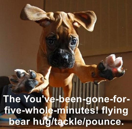 The You've-been-gone-for-five-whole-minutes! flying bear hug/tackle/pounce.