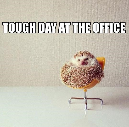 The boss is so prickly today!