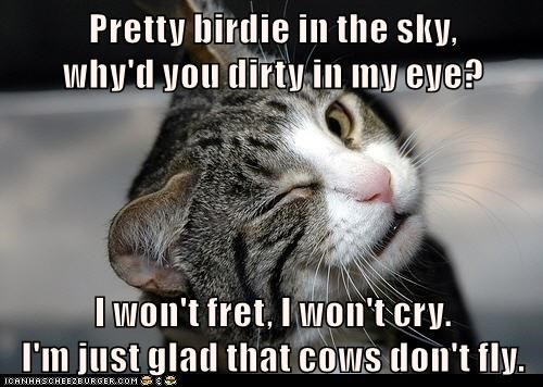 cat fret cry birdie sky eye caption dirty pretty glad cows