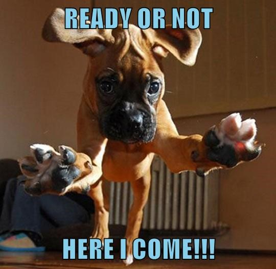 READY OR NOT  HERE I COME!!!
