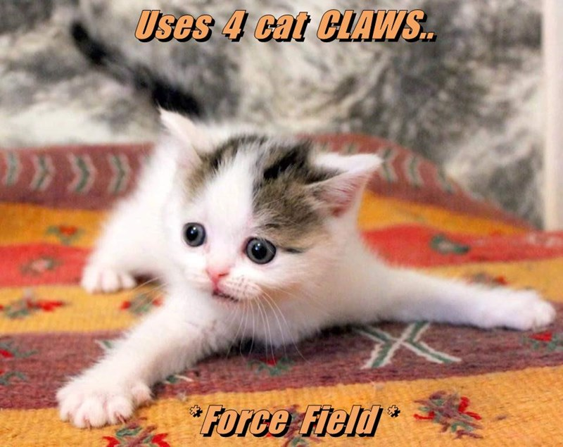Uses  4  cat  CLAWS..   * Force  Field *
